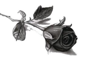 Grafika. Czarna róża na białym tle.